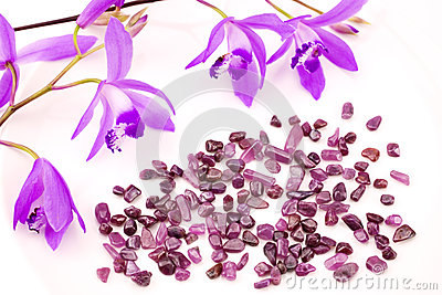Ruby and purple orchid