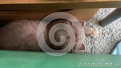 Ruch bawić się oświetleniowego punkt z ludźmi perski kot zbiory wideo
