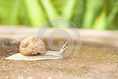 Ruchu ślimaczek