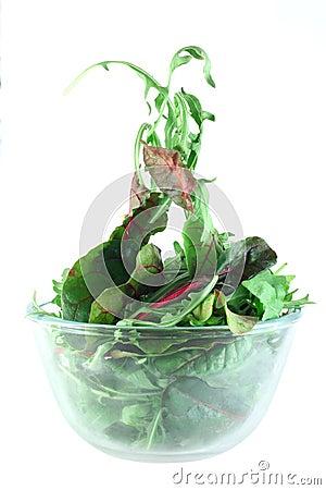 Rucola and Chard salad lightness concept