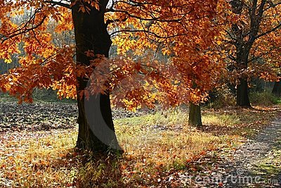 Ruelle d automne