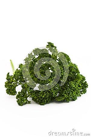 Ruff green parsley
