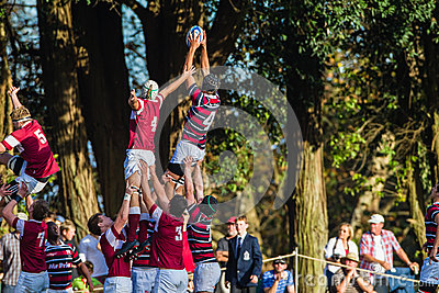 Rugby Action Line-out Jump Editorial Stock Image