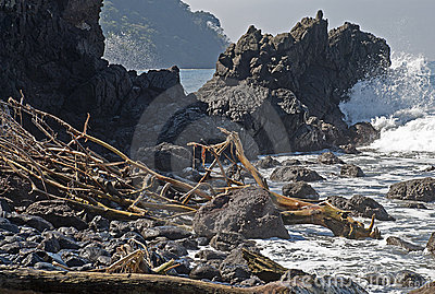 Rugged ocean coast with driftwood