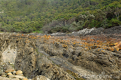 Rugged rocks and forest