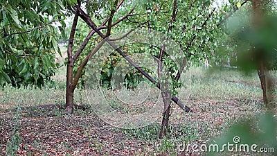 Ruhe im Garten an einem regnerischen Tag stock video footage