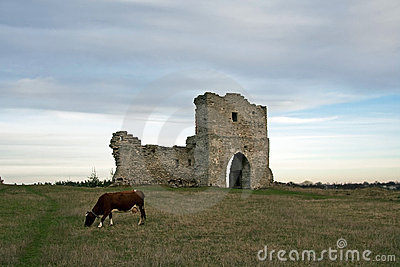 Ruined cossack gate and grazing cow