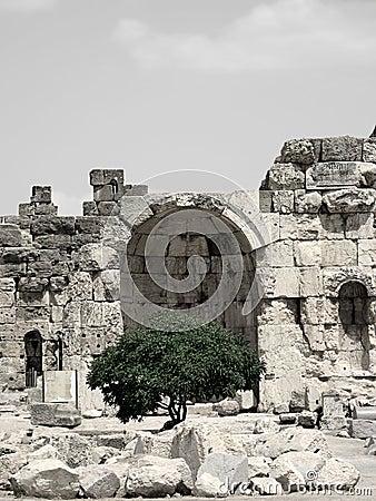 Ruinen und Baum