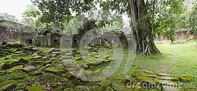 Ruins in jungle