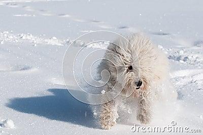 Run fast as a wind!