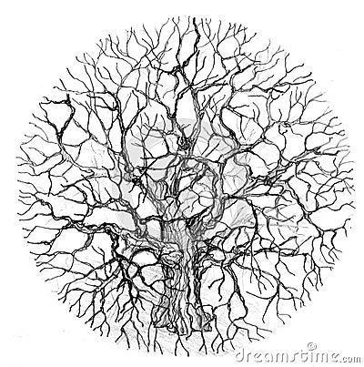 Runder Baum