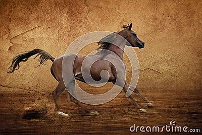 Runing Arabian horse