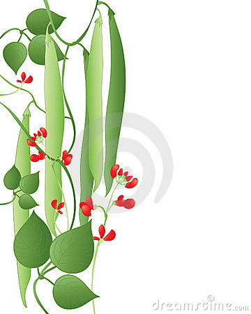 Runner Beans Royalty Free Stock Photography - Image: 17812677