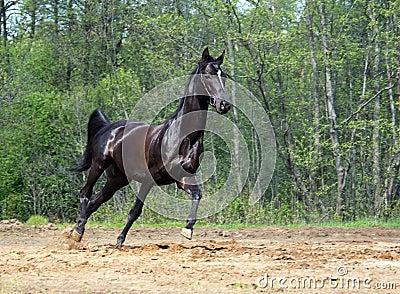 Running the black horse