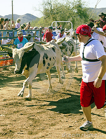 Running of the Bulls in America in Arizona Editorial Stock Photo
