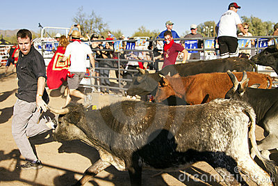 Running of the Bulls in America in Arizona Editorial Photography