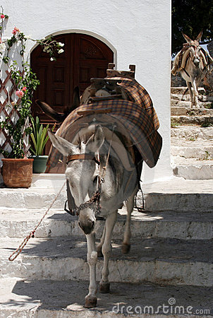 Free Running Donkeys Royalty Free Stock Image - 6646726