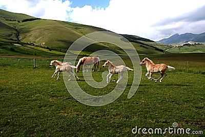 Running foals