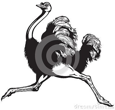 Free Running Ostrich Royalty Free Stock Image - 50238846