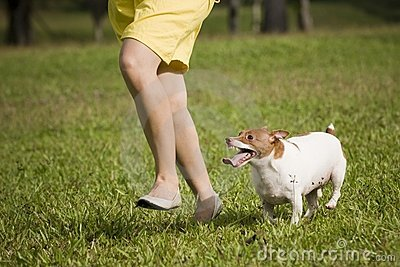 Running with pet dog