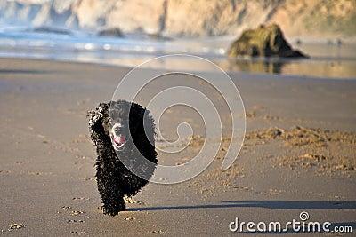 Running Pooch