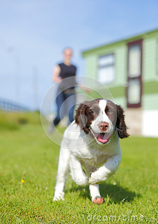 Free Running Puppy Dog Royalty Free Stock Photography - 29098737