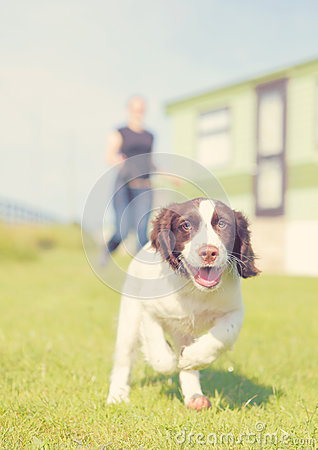 Free Running Puppy Dog Royalty Free Stock Photos - 61303868