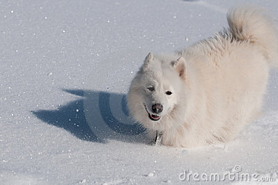 Running in a snow