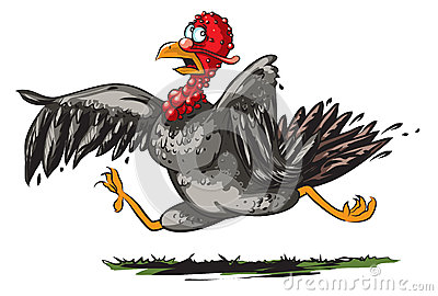 Running turkey Vector Illustration