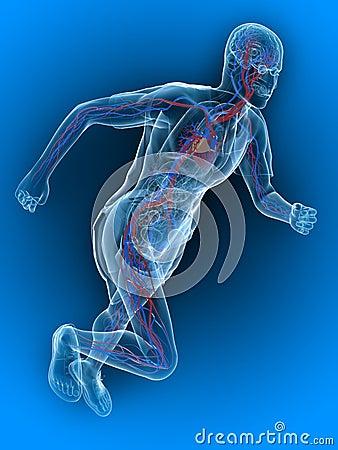 Running - vascular