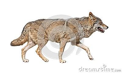 Running wolf cutout