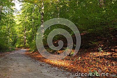 Rural autumn scenery