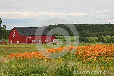 rural barn and tiger lilies stock photo image 42758844. Black Bedroom Furniture Sets. Home Design Ideas