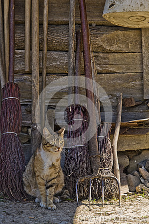 Free Rural Cat Portrait Royalty Free Stock Photos - 42979368