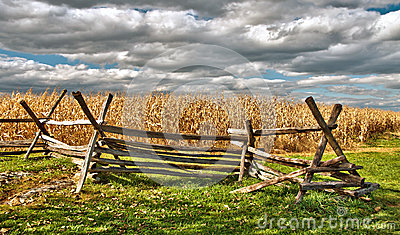 Rural Cornfield in autumn