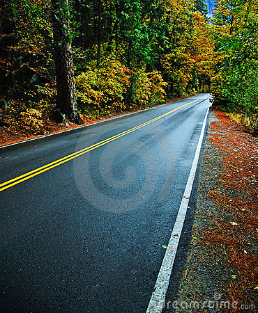 Rural countryside road through a forest