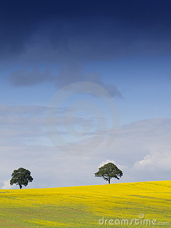 Rural English Landscape