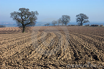 Rural English winter landscape