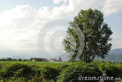Rural Friuli 1