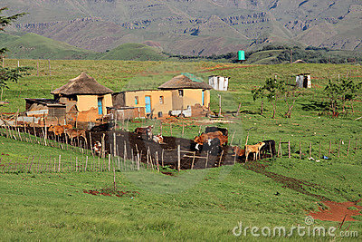 Rural huts and cattle