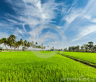 Rural Indian scene