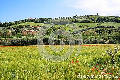 Rural Italian landscape