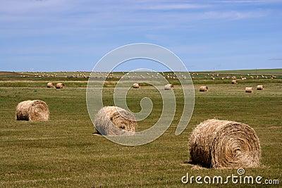 Rural landscape of Canada
