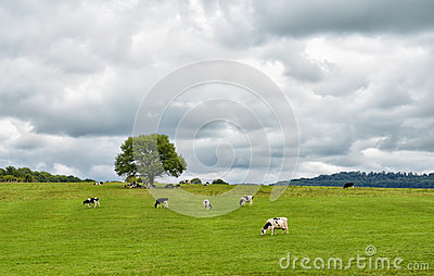 Rural landscape in central France