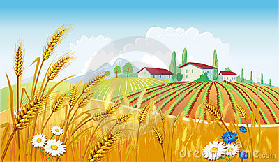 Rural landscape with fields