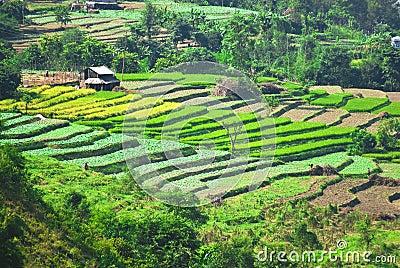 Rural landscape India