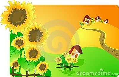 Rural landscape with sunflowers
