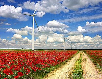 Rural landscape with wind turbines on poppies plan