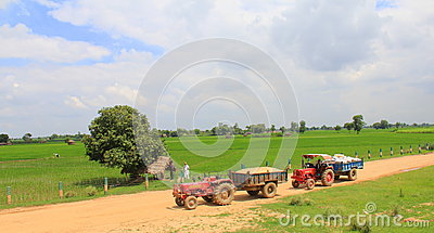 Rural life in India: wheat fields and 2 tractors Editorial Image