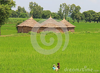 Rural life in India: wheat fields and farmers Editorial Photography